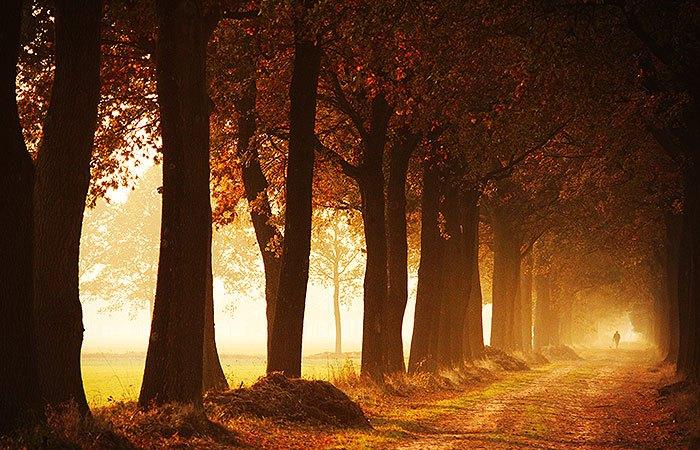 Herfst pad