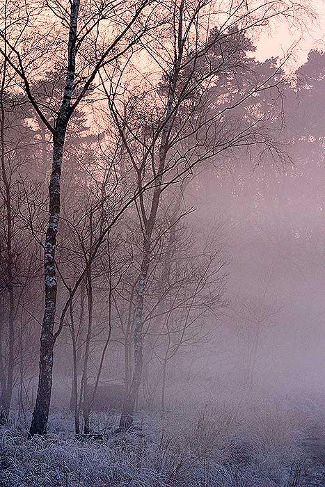 Sneeuwlandschap op de Loonse- en Drunense Duinen