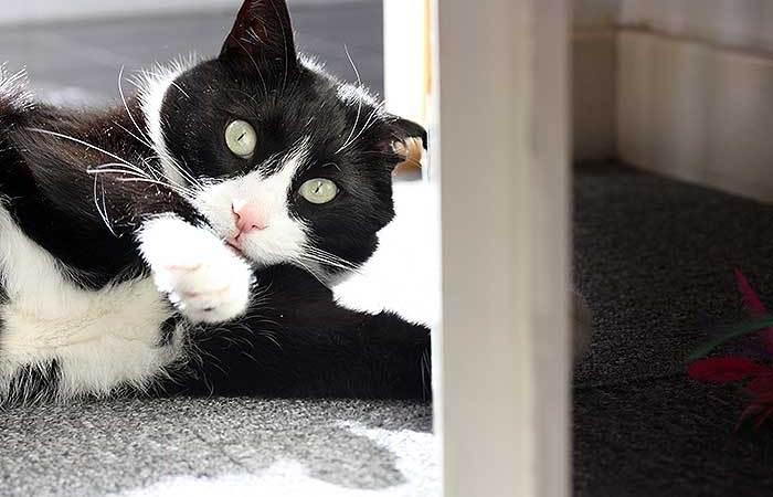 Tupisck kat dingen onder de deur hengelen