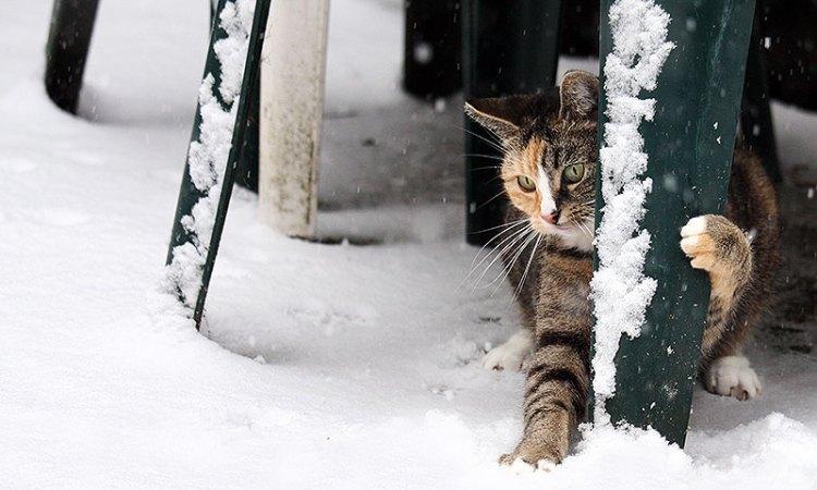 Fotoserie: Mia's dolle sneeuwbui