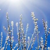 De 4+ leukste dingen om te doen in de lente