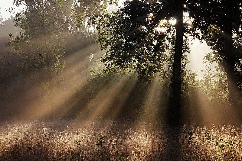 7 ultieme tips om mist te fotograferen