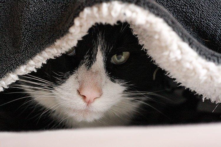 Waar je aan moet denken voor je een kat neemt