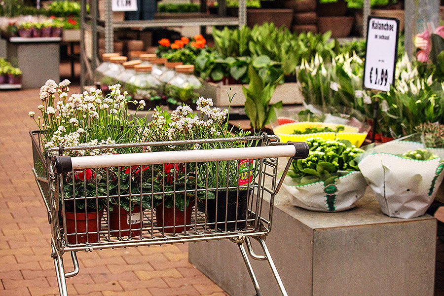 Lies in de tuinwinkel