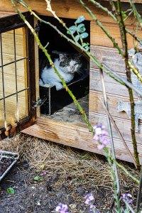 Job in het kattenhuis