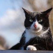 Dierendag: Onze katten in feiten en foto's