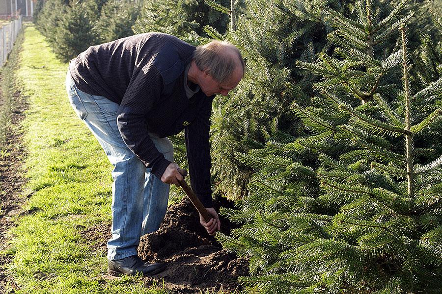 De kerstboom overhouden