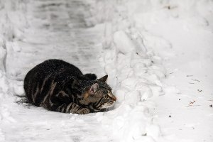 Mickey in de sneeuw