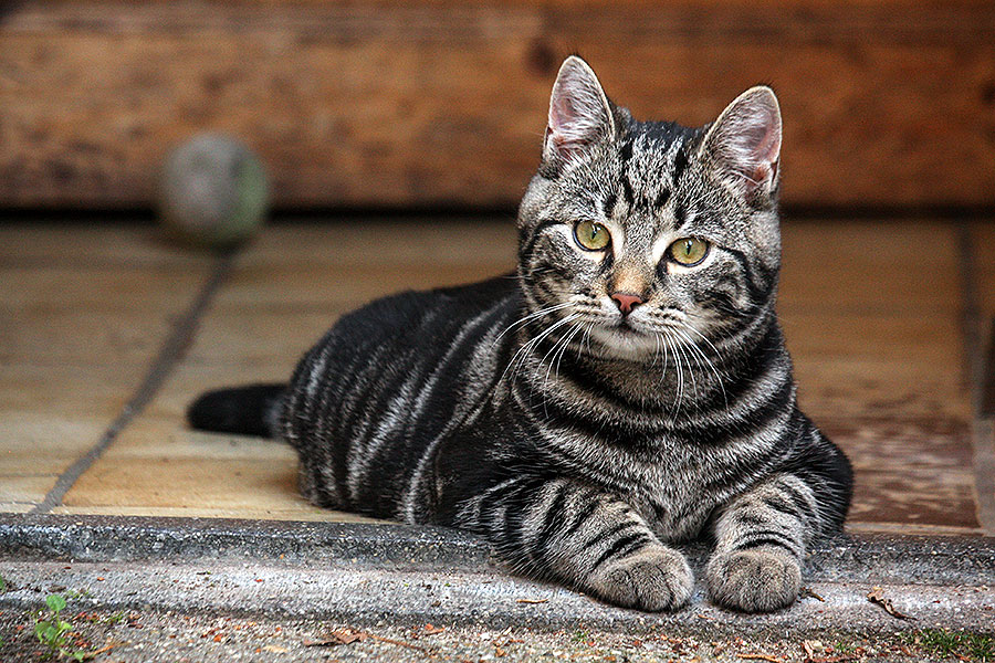 8 feiten over katten die je nog niet wist