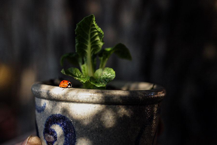 Tuinlog: Bevroren bloemetjes en een tuinmonster