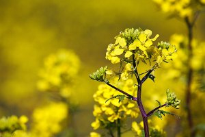 Kleine gele bloemetjes