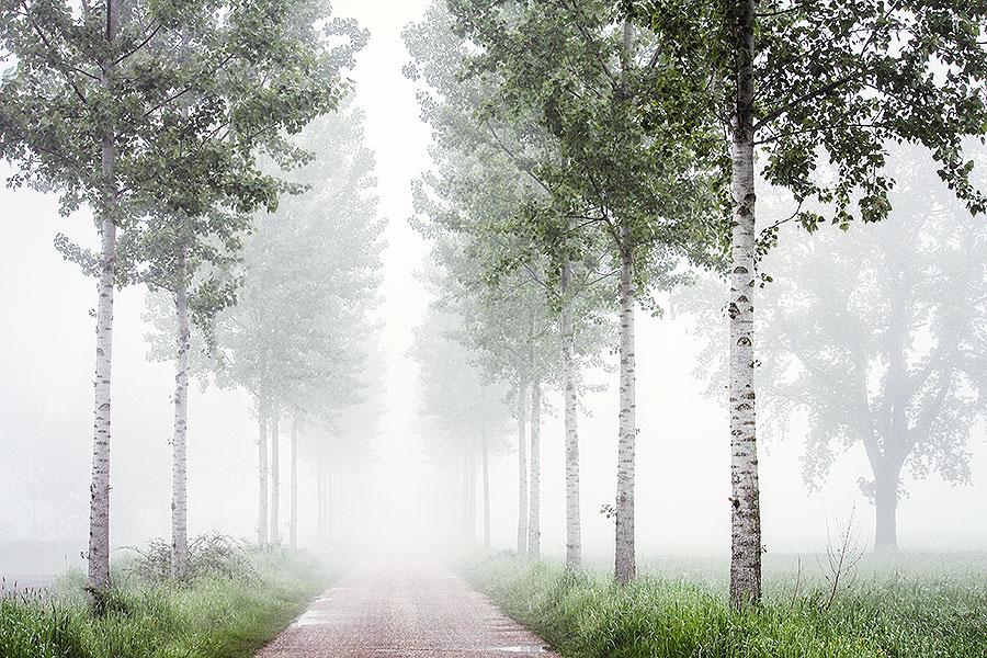 Fotoserie: Restje voorjaar door de mist