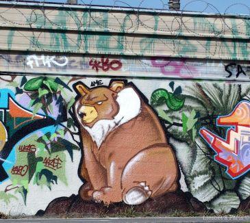 Bear on the wall