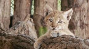 Artėjant žiemai zoologijos sodo gyventojams vėl reikia žmonių pagalbos
