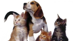 Ką turėtų žinoti gyvūnų augintinių šeimininkai