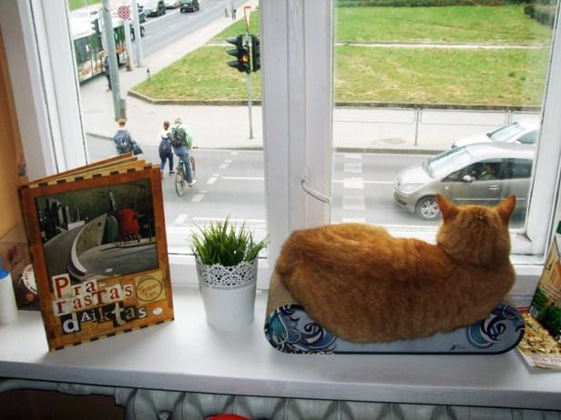 """Kavinė """"Cat Cafe"""""""