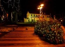 Palangą papuoš Kalėdų eglė, kokios Lietuva dar nematė