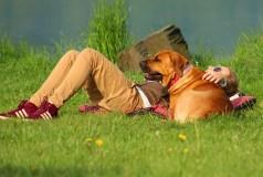 Stresą patiriantiems studentams mokslininkai siūlo šunų terapiją