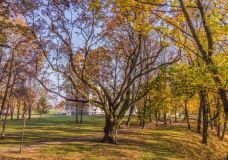 Plungės dvaro parko pažiba – pusės tūkstančio metų senumo Perkūno ąžuolas
