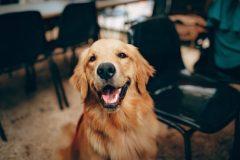 Kiek kainuoja kokybiškas šunų maistas. Pasakoja veterinaras
