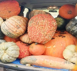 Image of a trunk full of squash and pumpkins