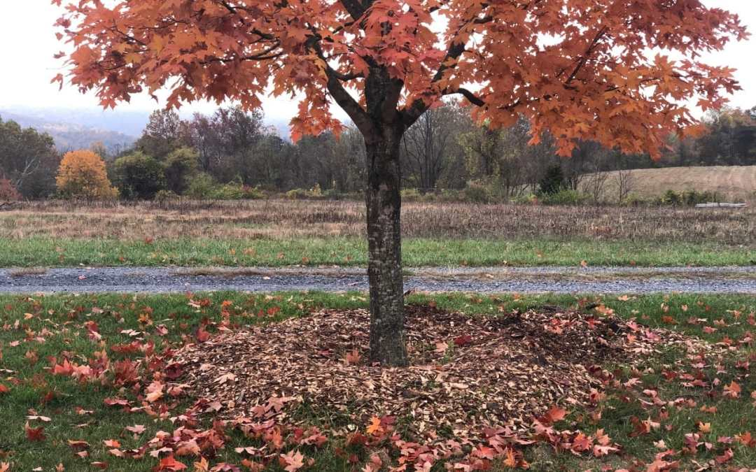 Mulch: Using Nature's Plan for Life
