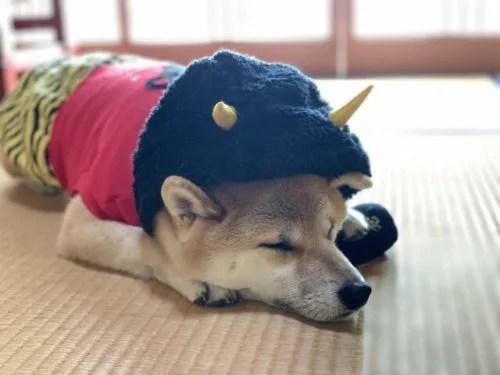 節分の豆 犬