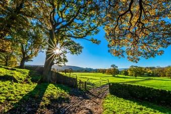 太陽光と朝