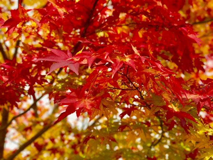 季節は秋。