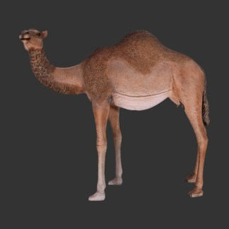 Female Dromedary Camel 7ft 3D Realistic Life Size Statue