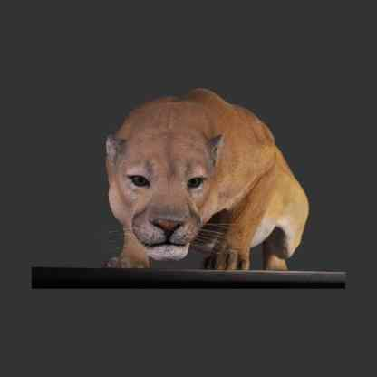 Cougar 3D Realistic Life Size Wild Animal Statue