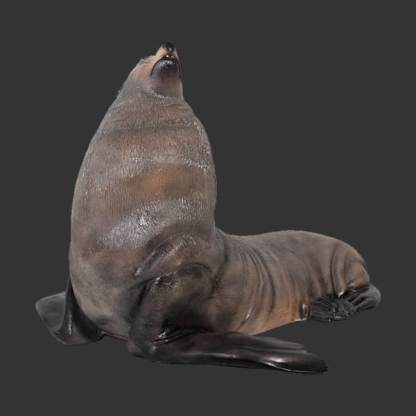 Male Fur Seal 3D Realistic Life Size Animal Model