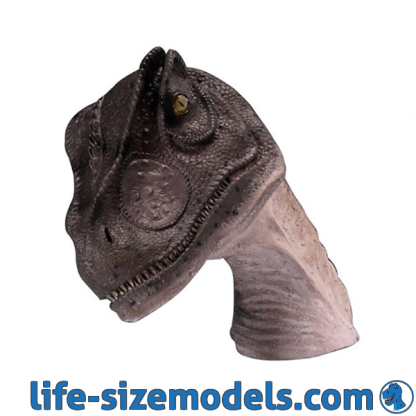 Allosaurus Head Model