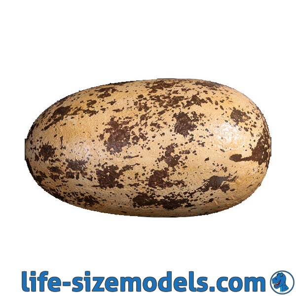 Theropod Egg 12 Inch Model Lifesize Models Props Art Trails Events Attractions