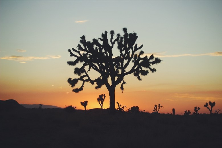 Joshua Tree, United States