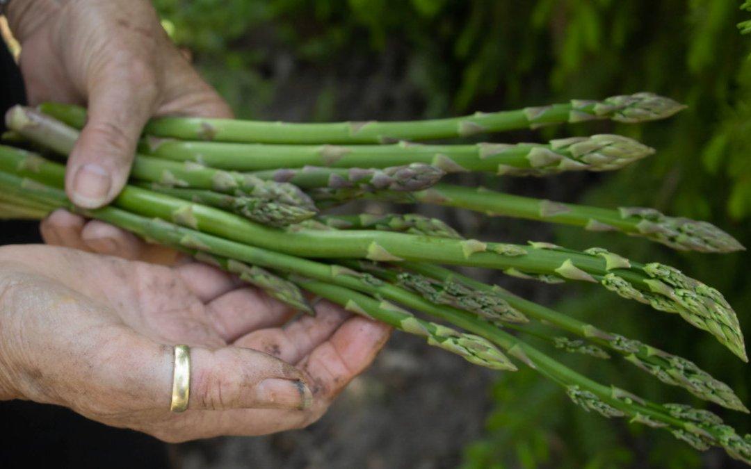 益生菌產生的短鏈脂肪酸有益健康?