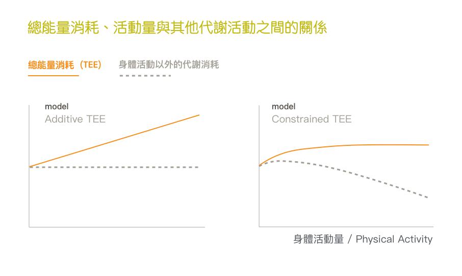 算熱量-能量消耗模型-TEE