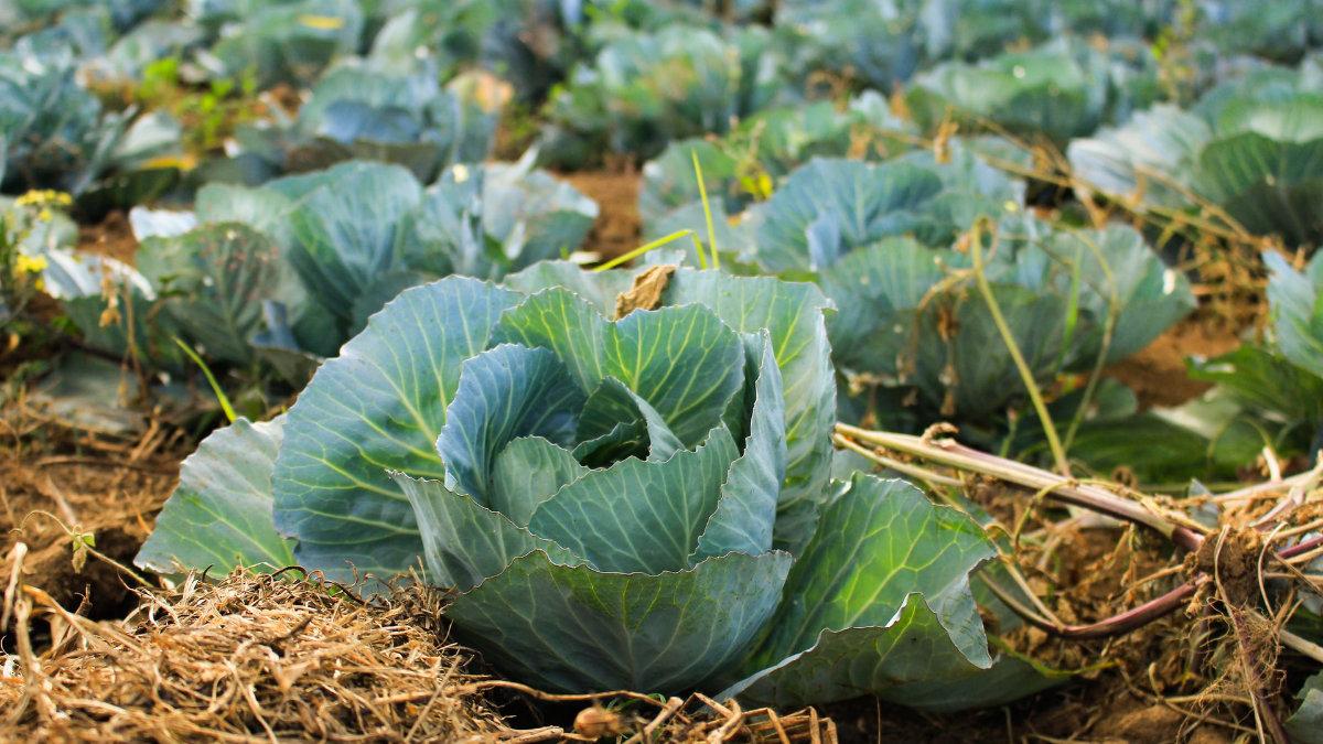 半夜抽筋-綠色蔬菜-鈣鎂