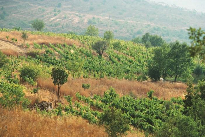 vineyard-hills