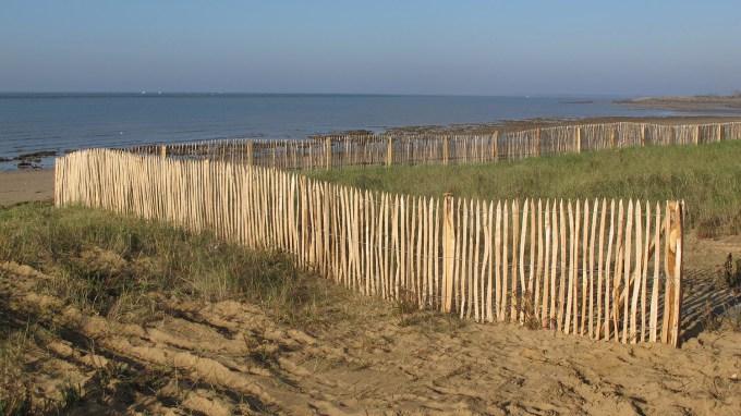 La dune de la Pointe de l'Aiguillon et ses ganivelles - Life baie de l'Aiguillon