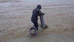 carottage baie aiguillon prélèvement vasière benthos macrofaune benthique sédiment