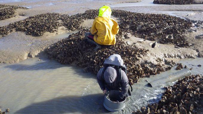 carottage baie aiguillon prélèvement vasière benthos macrofaune benthique sédiment crassats huitres japonnaises