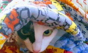 8 interesting facts about cats as pets