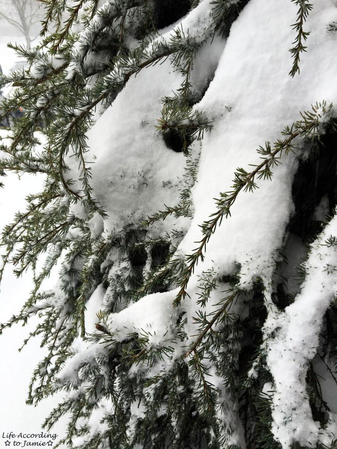 Weeping Pine & Snow