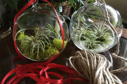 DIY Air Plant Terrarium