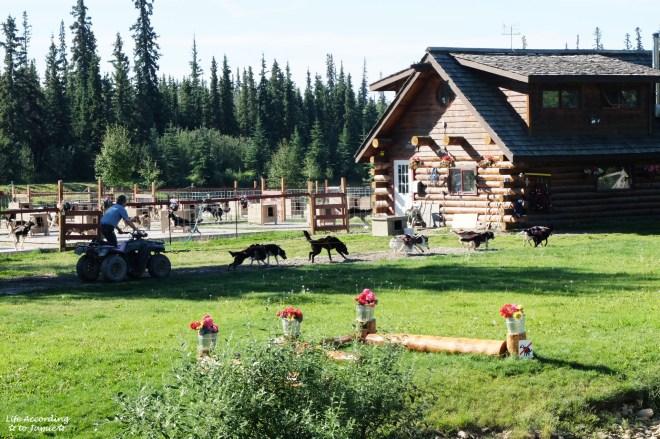 Iditarod Dog Kennel