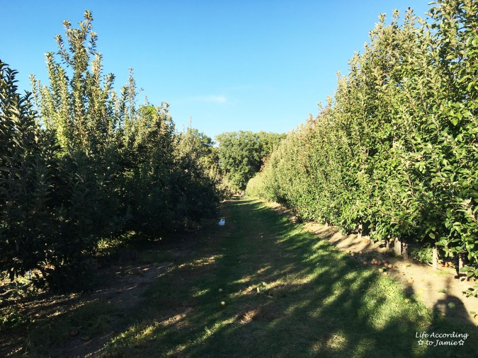 giamarese-farm-orchard-apple-orchard