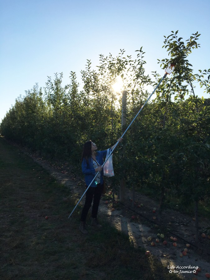 giamerese-farm-orchard-apple-picking-2