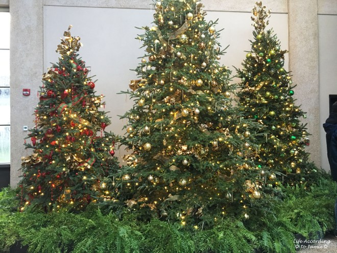 longwood-gardens-christmas-tree-trio