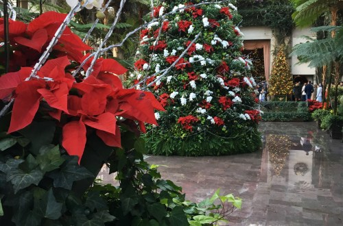 longwood-gardens-conservatory-red-white-tree